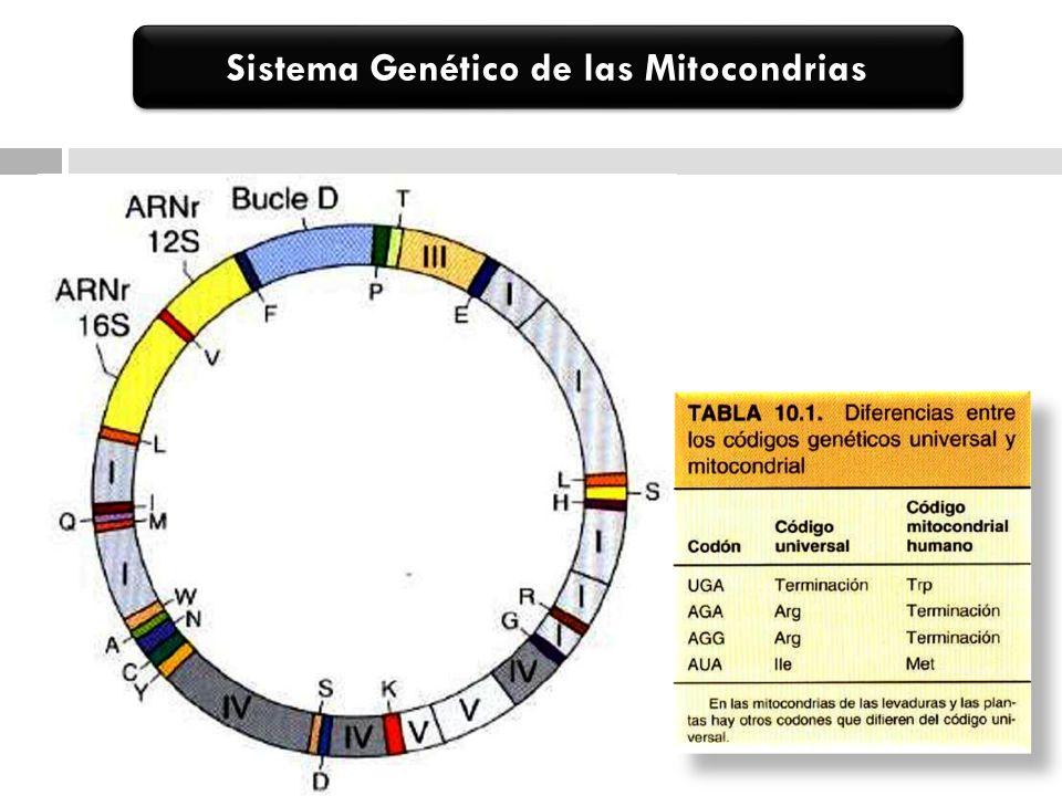 Proteínas Mitocondriales -Genoma Mitocondrial: -13 proteinas del de la cadena de electrones y fosforilacion oxidativa.