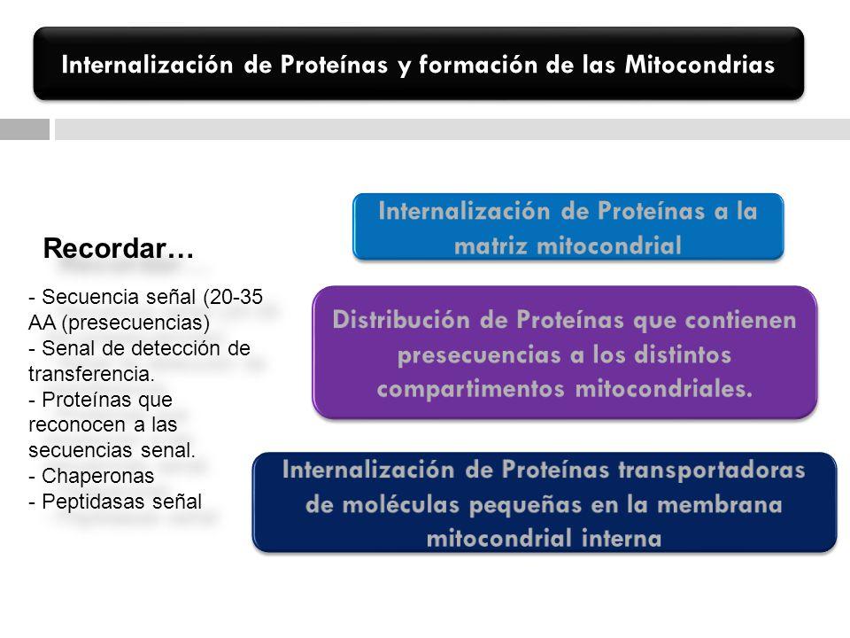 Internalización de Proteínas y formación de las Mitocondrias - Secuencia señal (20-35 AA (presecuencias) - Senal de detección de transferencia. - Prot