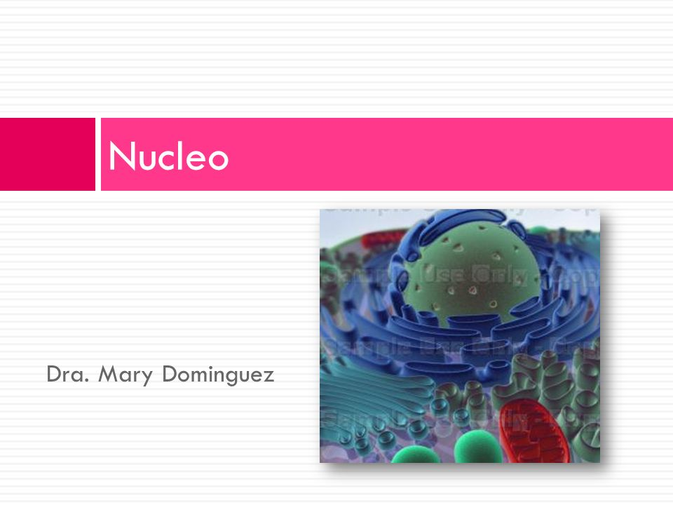 Dra. Mary Dominguez Nucleo