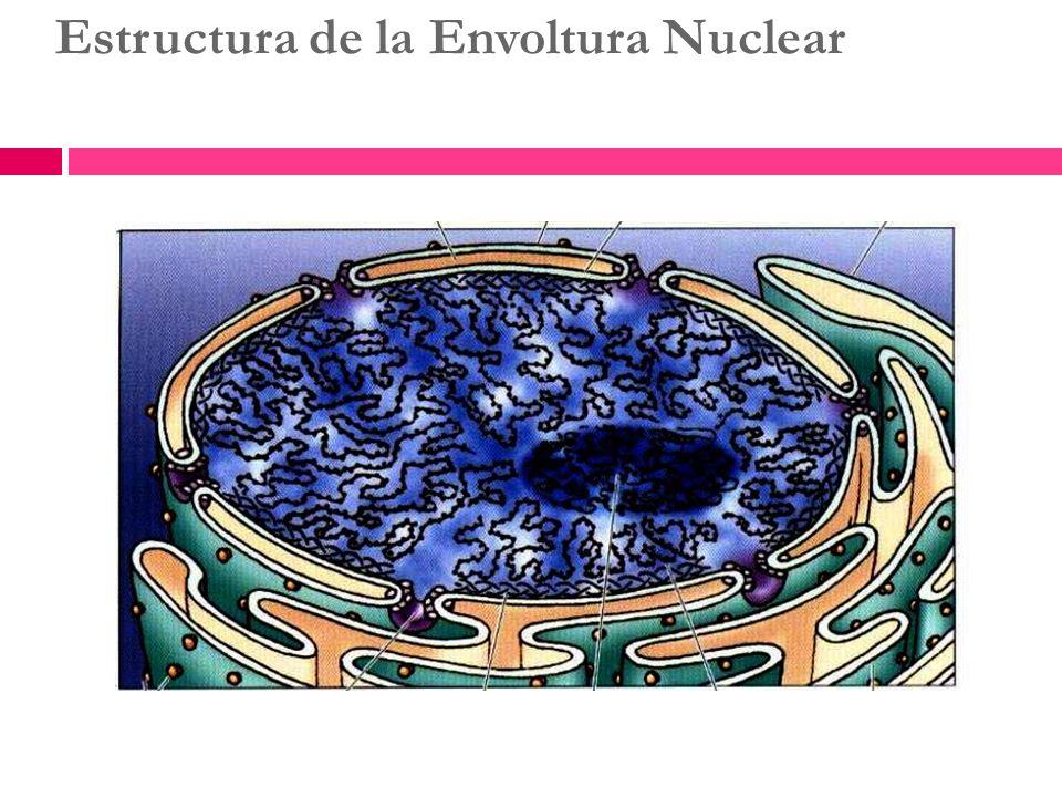 Estructura de la Envoltura Nuclear