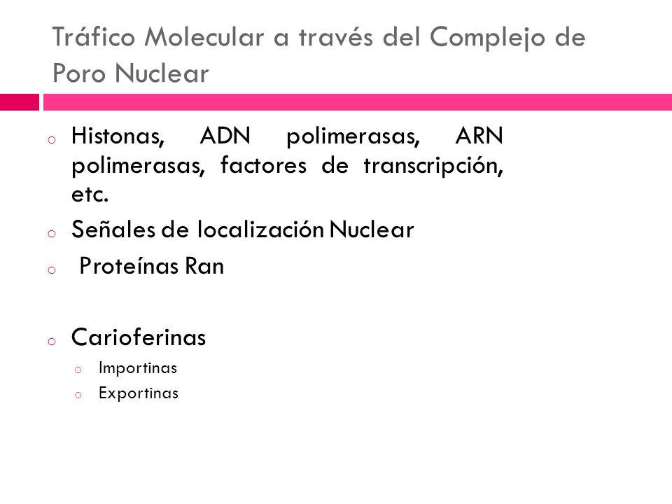 Tráfico Molecular a través del Complejo de Poro Nuclear o Histonas, ADN polimerasas, ARN polimerasas, factores de transcripción, etc. o Señales de loc