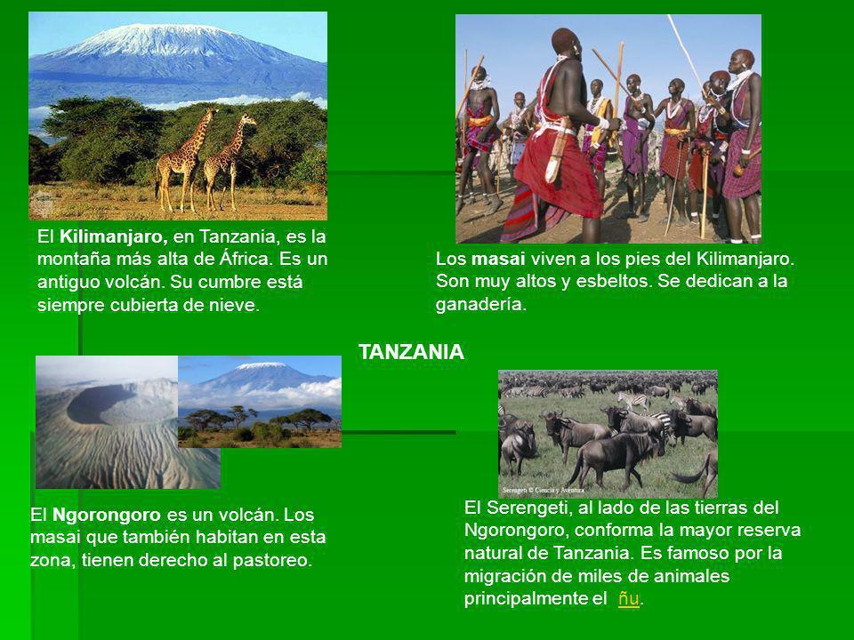 La selva ecuatorial del Congo es espesa y húmeda.Tiene una extensión de casi dos veces España.