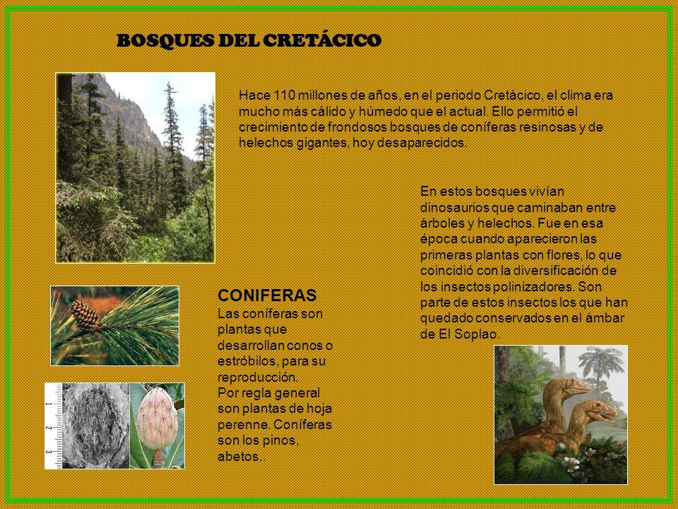LOCALIZACIÓN DEL YACIMIENTO DE ÁMBAR EL SOPLAO El yacimiento de ámbar se encuentra en el pueblo de Rábago, del municipio de Herrerías, cercano a Valdáliga.