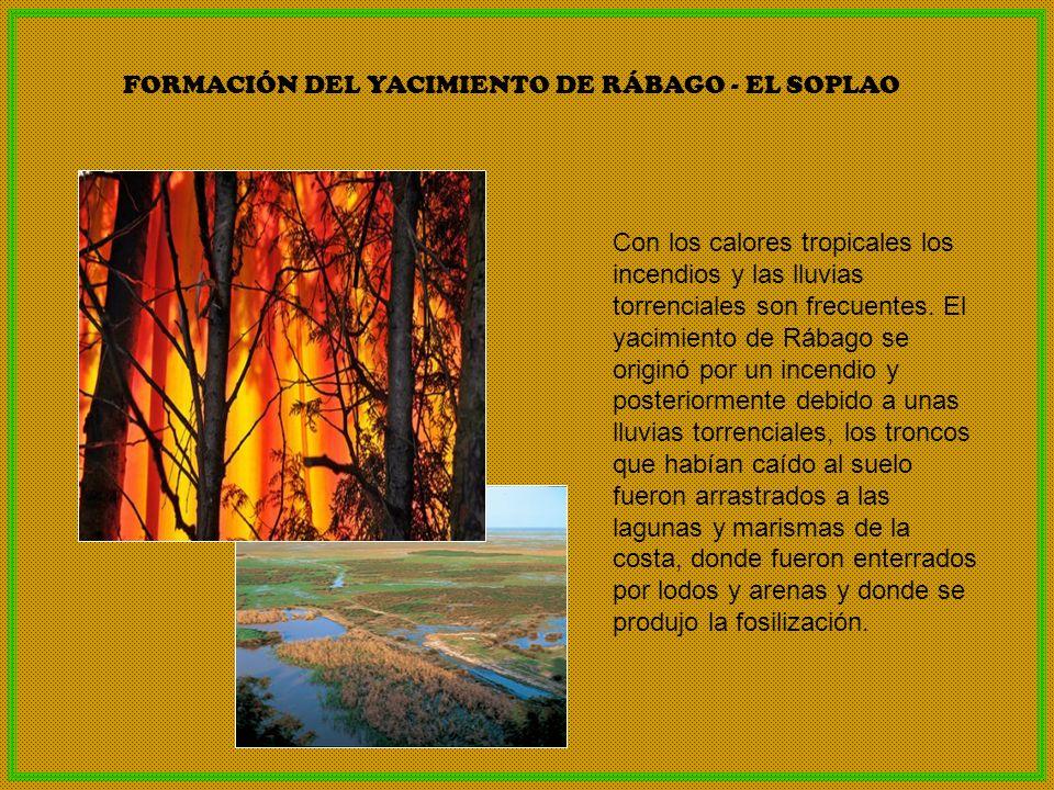 Con los calores tropicales los incendios y las lluvias torrenciales son frecuentes. El yacimiento de Rábago se originó por un incendio y posteriorment