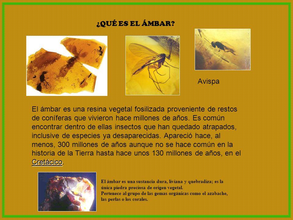 ¿QUÉ ES EL ÁMBAR? Cretácico El ámbar es una resina vegetal fosilizada proveniente de restos de coníferas que vivieron hace millones de años. Es común