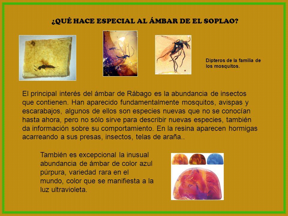El principal interés del ámbar de Rábago es la abundancia de insectos que contienen. Han aparecido fundamentalmente mosquitos, avispas y escarabajos,