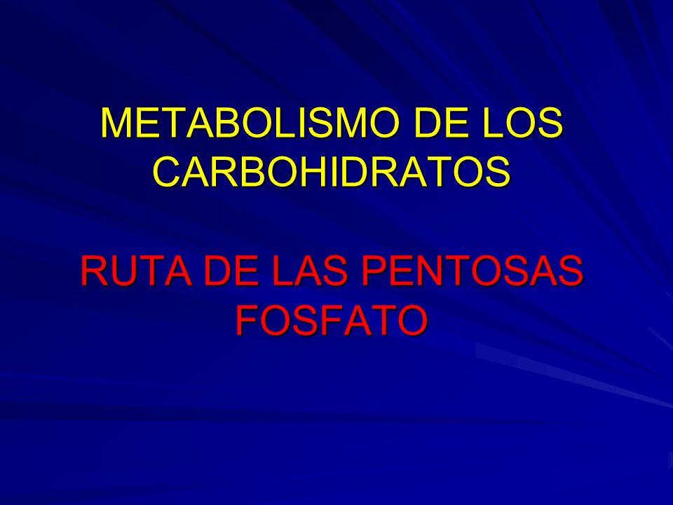 METABOLISMO DE LOS CARBOHIDRATOS RUTA DE LAS PENTOSAS FOSFATO METABOLISMO DE LOS CARBOHIDRATOS RUTA DE LAS PENTOSAS FOSFATO