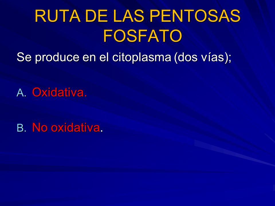 RUTA DE LAS PENTOSAS FOSFATO Se produce en el citoplasma (dos vías); A. Oxidativa. B. No oxidativa.