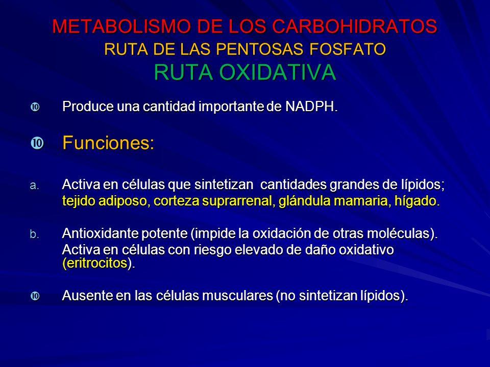METABOLISMO DE LOS CARBOHIDRATOS RUTA DE LAS PENTOSAS FOSFATO RUTA OXIDATIVA Produce una cantidad importante de NADPH.