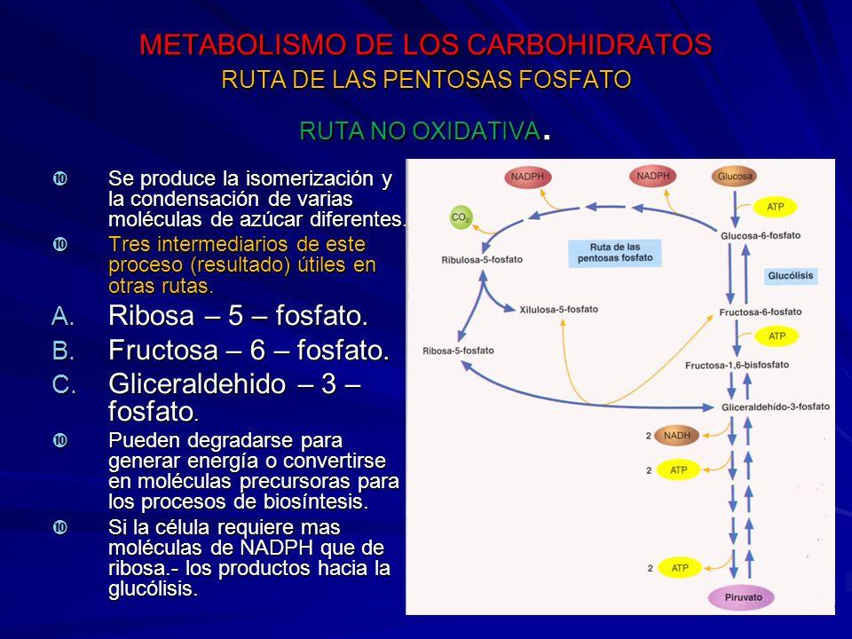 METABOLISMO DE LOS CARBOHIDRATOS RUTA DE LAS PENTOSAS FOSFATO RUTA NO OXIDATIVA.
