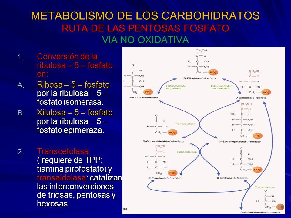 METABOLISMO DE LOS CARBOHIDRATOS RUTA DE LAS PENTOSAS FOSFATO VIA NO OXIDATIVA 1.