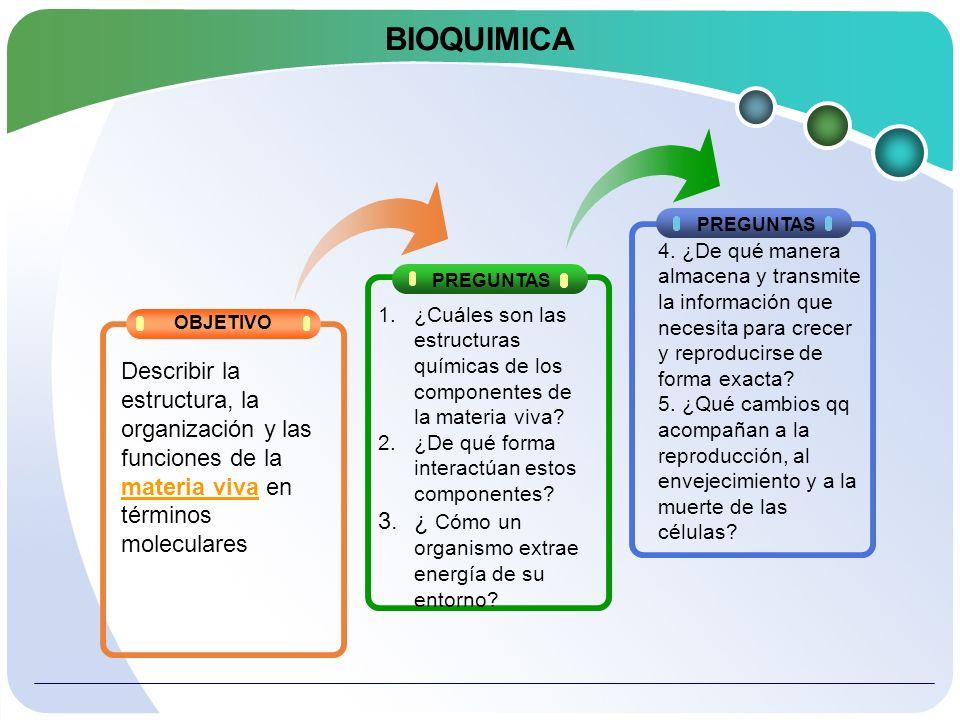 Áreas principales de la bioquímica Componentes de la materia viva Relación de la función biológica con la estructura química Totalidad de la reacciones químicas que se producen en la materia viva 3 Procesos y sustancias que almacenan y transmiten información biológica MetabolismoGenética molecularQuímica estructural 12