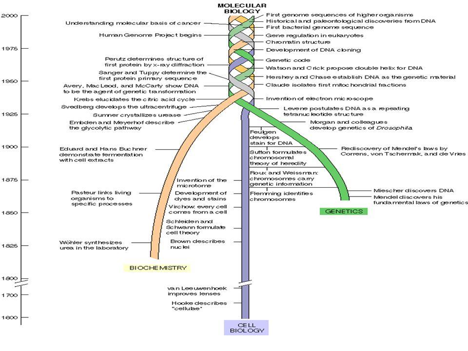 Estudio de las bases químicas de la vida La vida es compleja y dinámica La vida esta organizada y automatizada La vida es celular La vida se fundamenta en la información La vida se adapta y evoluciona