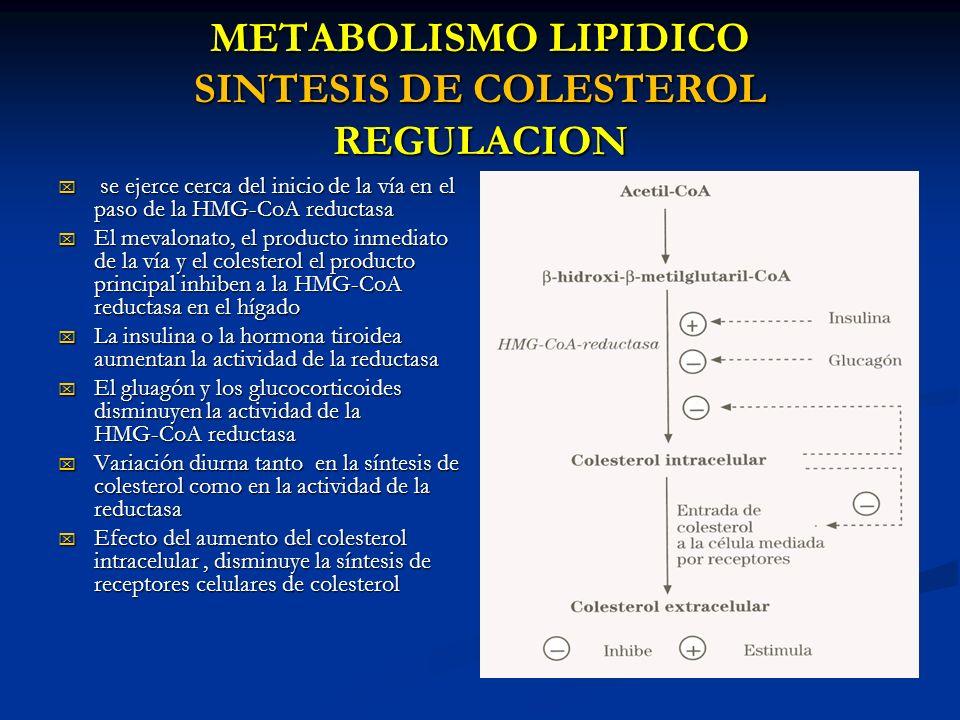 METABOLISMO LIPIDICO SINTESIS DE COLESTEROL REGULACION se ejerce cerca del inicio de la vía en el paso de la HMG-CoA reductasa se ejerce cerca del ini