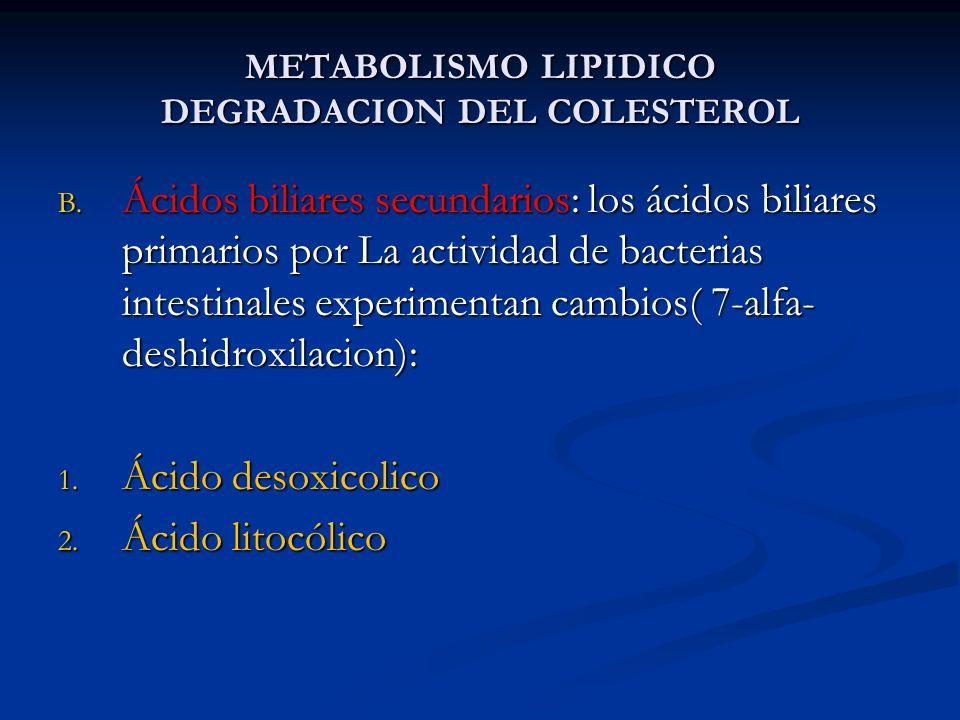 METABOLISMO LIPIDICO DEGRADACION DEL COLESTEROL B. Ácidos biliares secundarios: los ácidos biliares primarios por La actividad de bacterias intestinal