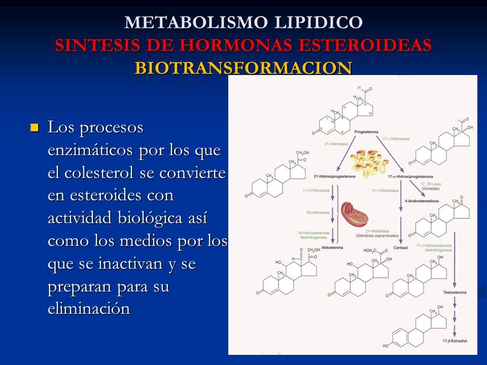 METABOLISMO LIPIDICO SINTESIS DE HORMONAS ESTEROIDEAS BIOTRANSFORMACION Los procesos enzimáticos por los que el colesterol se convierte en esteroides