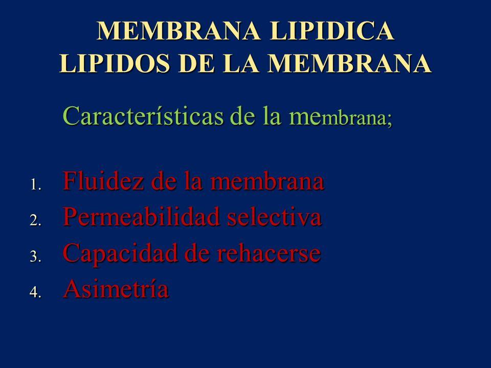 MEMBRANA LIPIDICA LIPIDOS DE LA MEMBRANA Características de la me mbrana; Características de la me mbrana; 1. Fluidez de la membrana 2. Permeabilidad