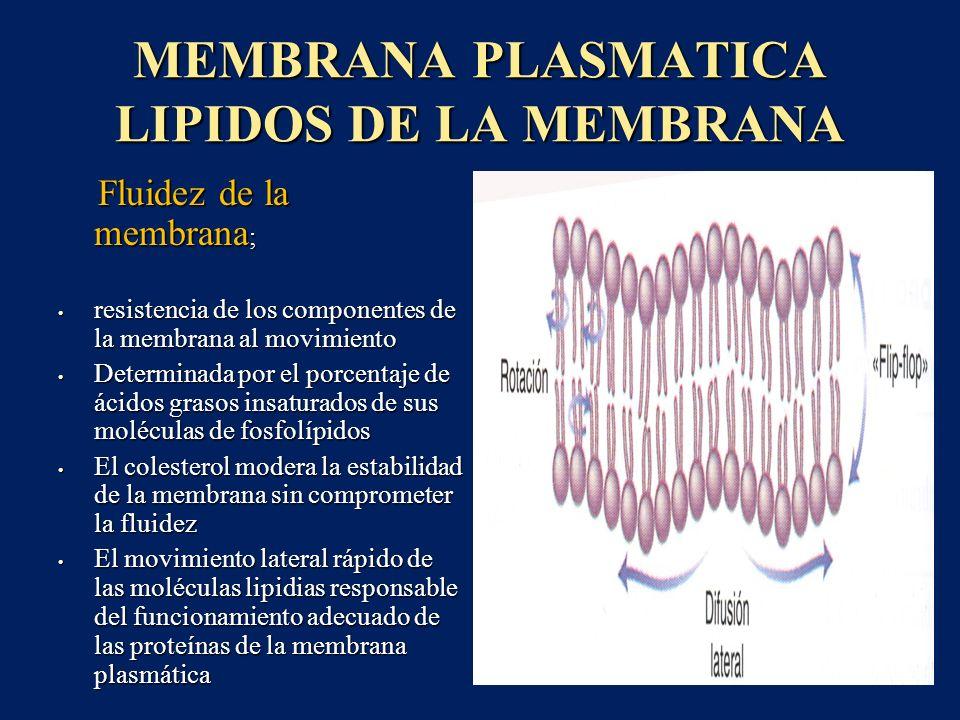 MEMBRANA PLASMATICA LIPIDOS DE LA MEMBRANA Fluidez de la membrana ; Fluidez de la membrana ; resistencia de los componentes de la membrana al movimien