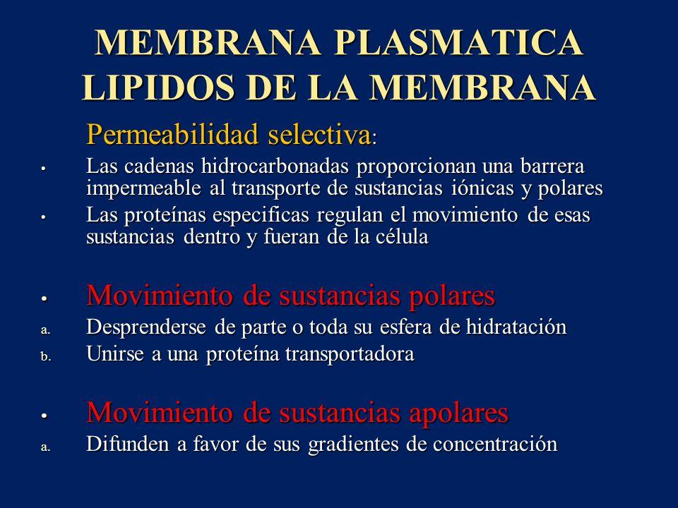 MEMBRANA PLASMATICA LIPIDOS DE LA MEMBRANA Permeabilidad selectiva : Permeabilidad selectiva : Las cadenas hidrocarbonadas proporcionan una barrera im