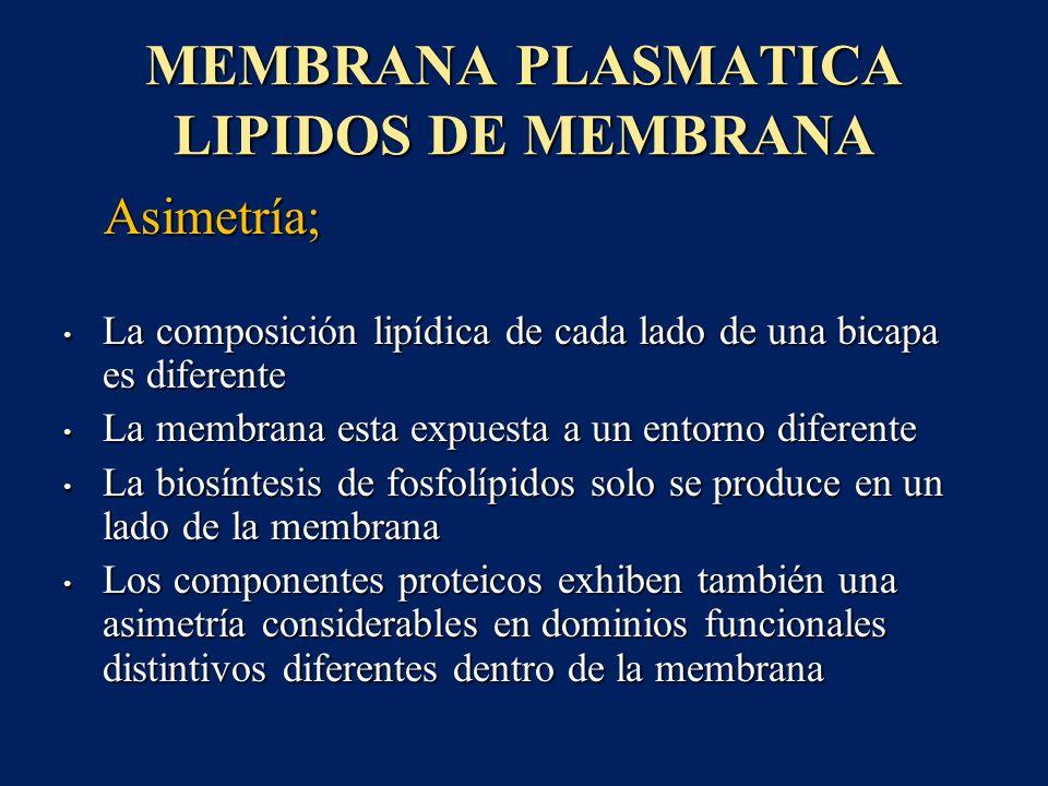 MEMBRANA PLASMATICA LIPIDOS DE MEMBRANA Asimetría; Asimetría; La composición lipídica de cada lado de una bicapa es diferente La composición lipídica