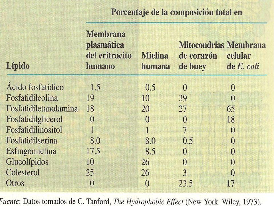 MEMBRANA LIPIDICA LIPIDOS DE LA MEMBRANA Características de la me mbrana; Características de la me mbrana; 1.