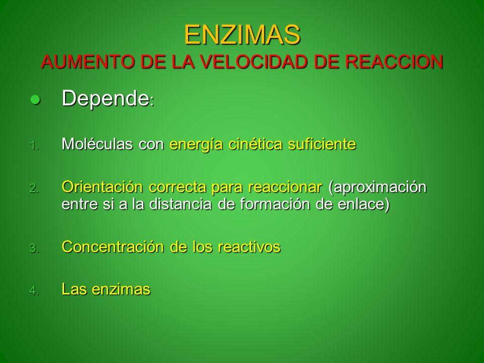 ENZIMAS AUMENTO DE LA VELOCIDAD DE REACCION Depende : Depende : 1. Moléculas con energía cinética suficiente 2. Orientación correcta para reaccionar (