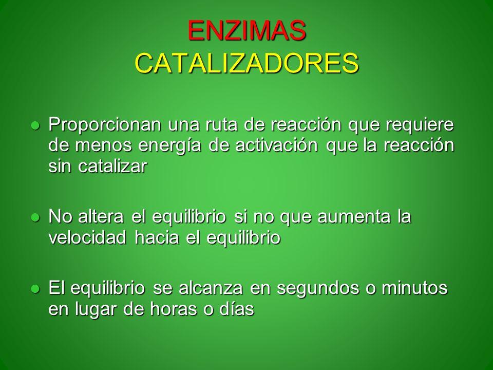 ENZIMAS CATALIZADORES Proporcionan una ruta de reacción que requiere de menos energía de activación que la reacción sin catalizar Proporcionan una rut