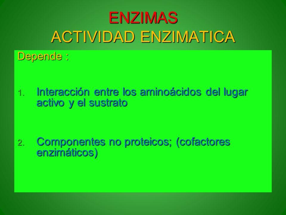 ENZIMAS ACTIVIDAD ENZIMATICA Depende : 1. Interacción entre los aminoácidos del lugar activo y el sustrato 2. Componentes no proteicos; (cofactores en