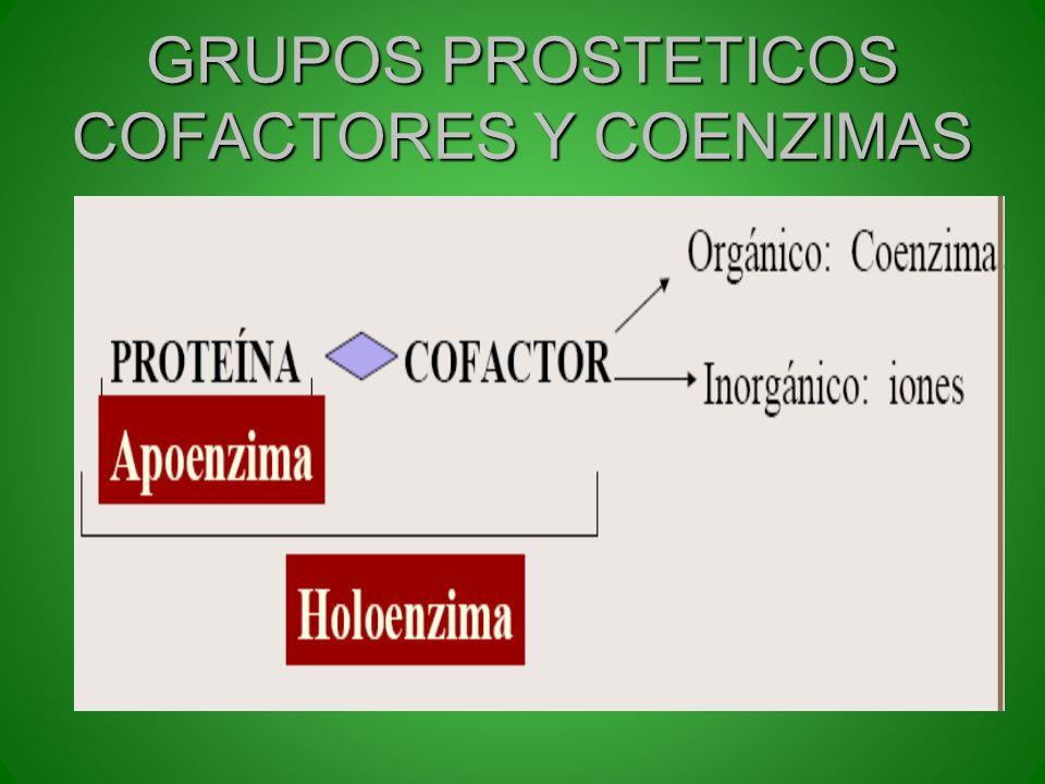 GRUPOS PROSTETICOS COFACTORES Y COENZIMAS