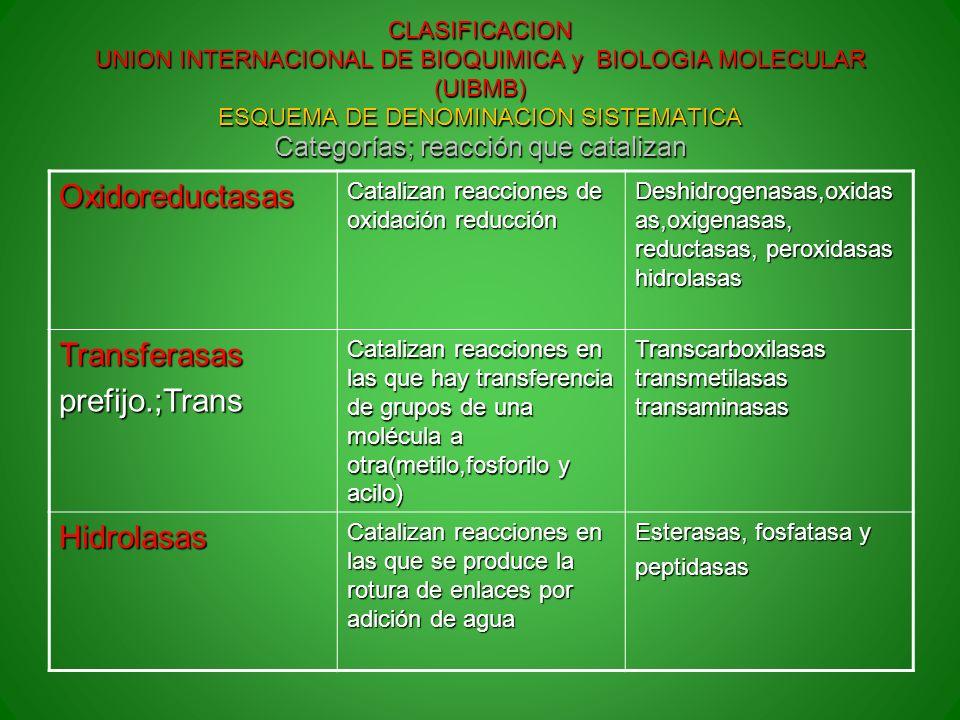 CLASIFICACION UNION INTERNACIONAL DE BIOQUIMICA y BIOLOGIA MOLECULAR (UIBMB) ESQUEMA DE DENOMINACION SISTEMATICA Categorías; reacción que catalizan Ox