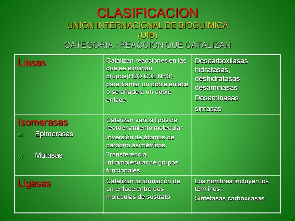 CLASIFICACION UNION INTERNACIONAL DE BIOQUIMICA (UIB) CATEGORIA : REACCION QUE CATALIZAN Liasas Catalizan reacciones en las que se eliminan grupos(H2O