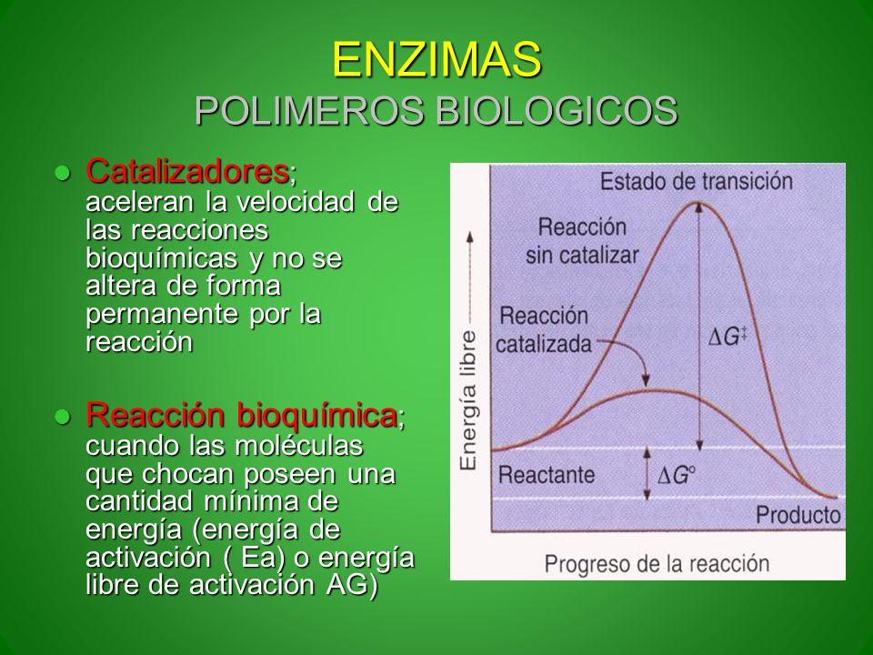 ENZIMAS POLIMEROS BIOLOGICOS Catalizadores ; aceleran la velocidad de las reacciones bioquímicas y no se altera de forma permanente por la reacción Ca