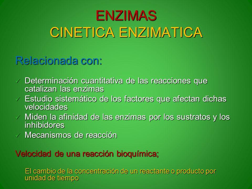 ENZIMAS CINETICA ENZIMATICA Relacionada con: Determinación cuantitativa de las reacciones que catalizan las enzimas Determinación cuantitativa de las