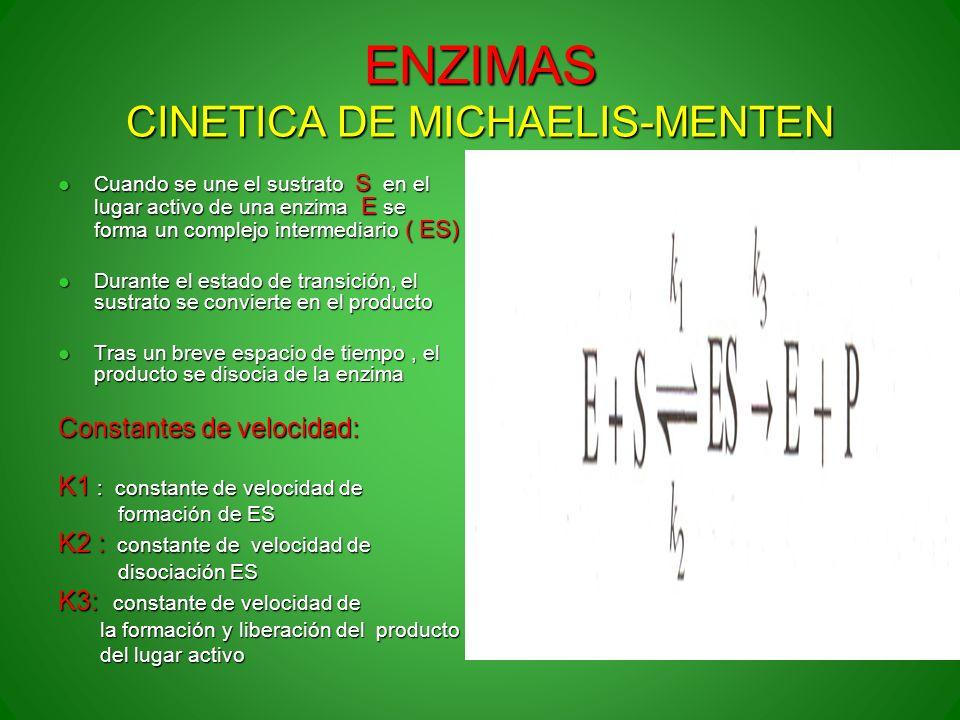 ENZIMAS CINETICA DE MICHAELIS-MENTEN Cuando se une el sustrato S en el lugar activo de una enzima E se forma un complejo intermediario ( ES) Cuando se