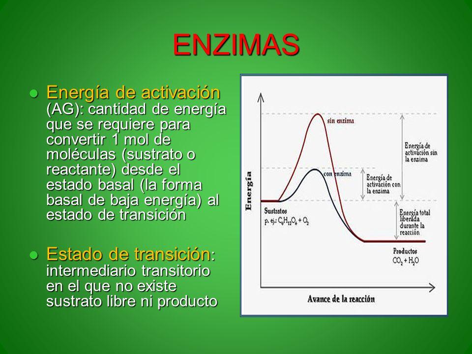 ENZIMAS Energía de activación (AG): cantidad de energía que se requiere para convertir 1 mol de moléculas (sustrato o reactante) desde el estado basal