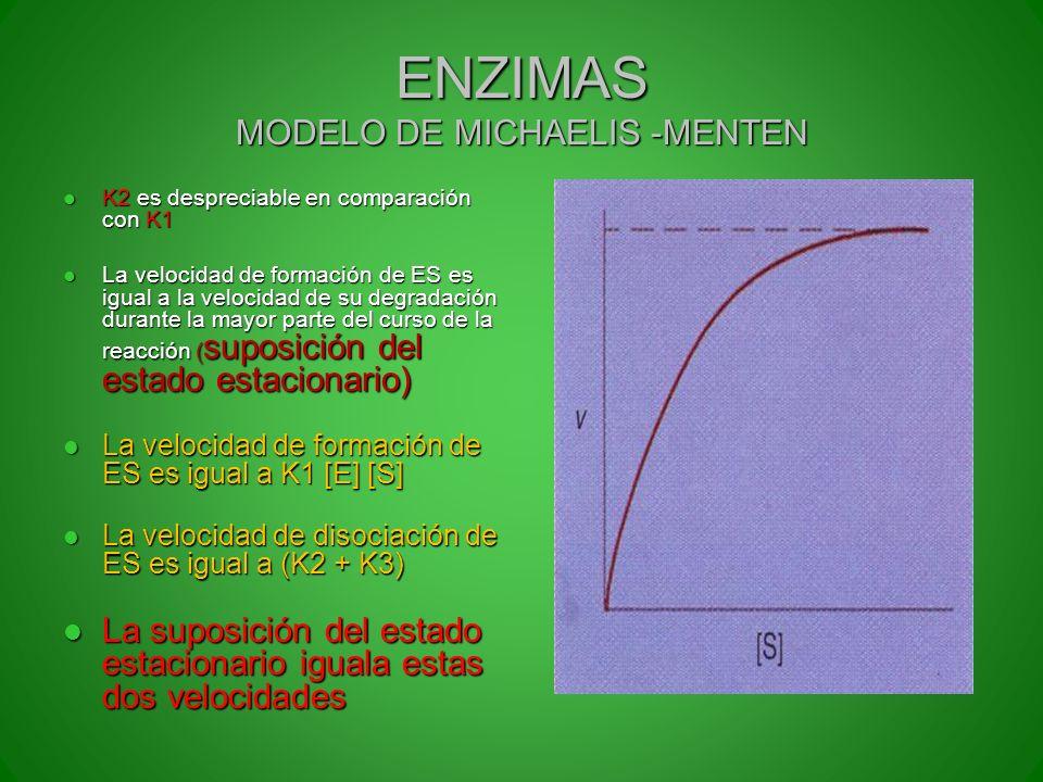 ENZIMAS MODELO DE MICHAELIS -MENTEN K2 es despreciable en comparación con K1 K2 es despreciable en comparación con K1 La velocidad de formación de ES