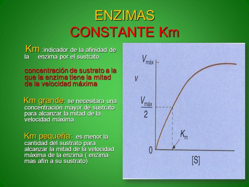 ENZIMAS CONSTANTE Km Km :indicador de la afinidad de la enzima por el sustrato Km :indicador de la afinidad de la enzima por el sustrato concentración
