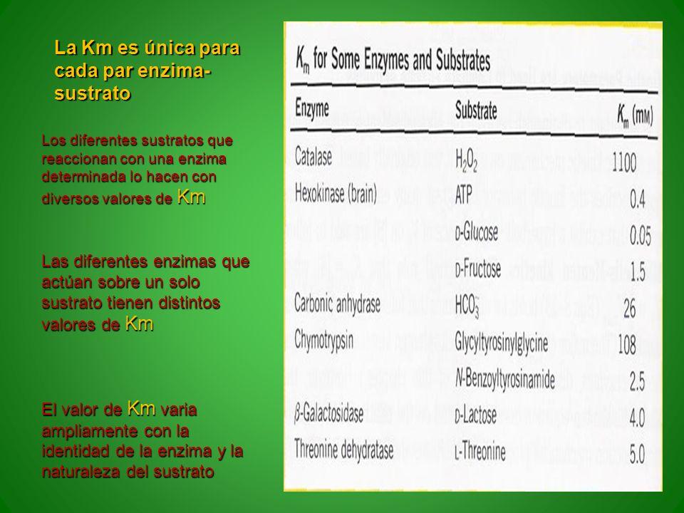 La Km es única para cada par enzima- sustrato Los diferentes sustratos que reaccionan con una enzima determinada lo hacen con diversos valores de Km L