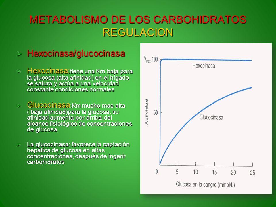 METABOLISMO DE LOS CARBOHIDRATOS REGULACION Hexocinasa/glucocinasa Hexocinasa/glucocinasa Hexocinasa: tiene una Km baja para la glucosa (alta afinidad