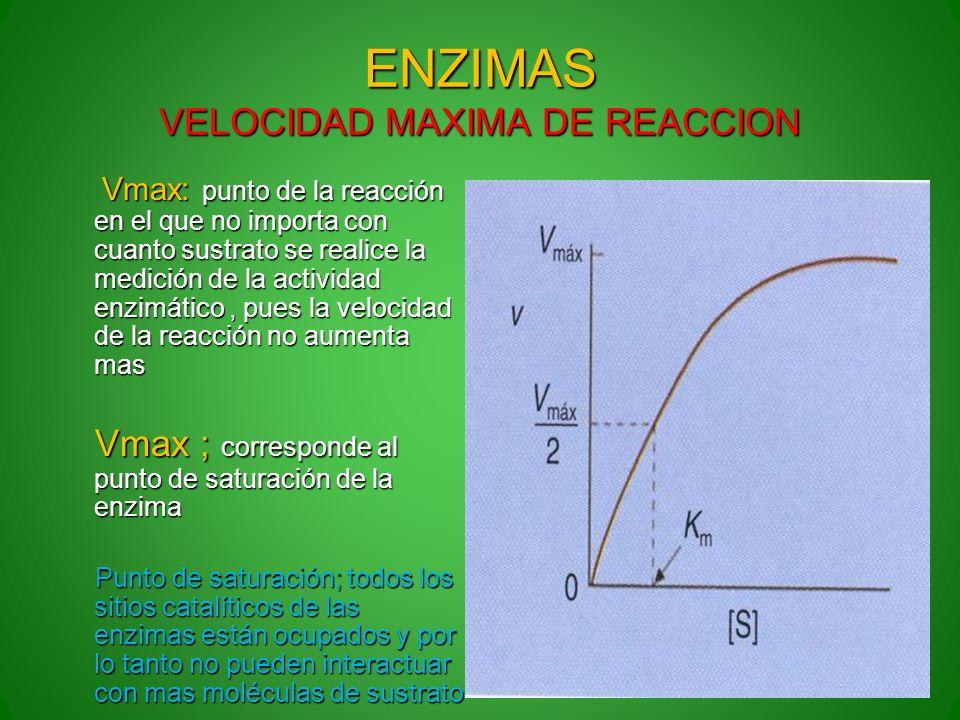 ENZIMAS VELOCIDAD MAXIMA DE REACCION Vmax: punto de la reacción en el que no importa con cuanto sustrato se realice la medición de la actividad enzimá