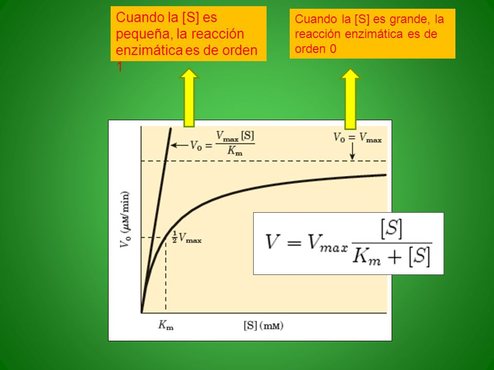 Cuando la [S] es pequeña, la reacción enzimática es de orden 1 Cuando la [S] es grande, la reacción enzimática es de orden 0