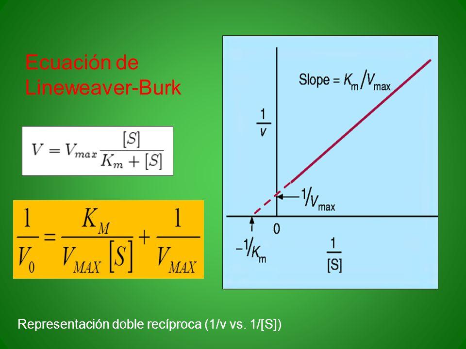 Ecuación de Lineweaver-Burk Representación doble recíproca (1/v vs. 1/[S])