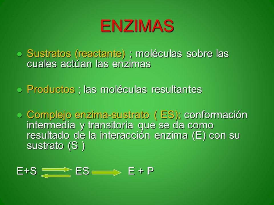 ENZIMAS Sustratos (reactante) ; moléculas sobre las cuales actúan las enzimas Sustratos (reactante) ; moléculas sobre las cuales actúan las enzimas Pr