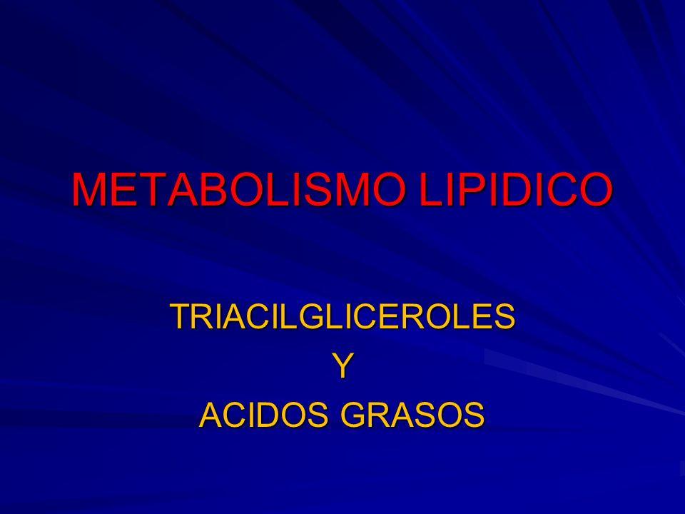 METABOLISMO LIPIDICO TRIACILGLICEROLESY ACIDOS GRASOS