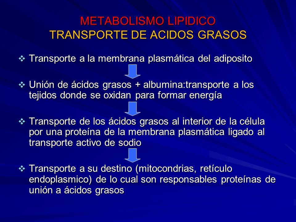 METABOLISMO LIPIDICO TRANSPORTE DE ACIDOS GRASOS Transporte a la membrana plasmática del adiposito Transporte a la membrana plasmática del adiposito U