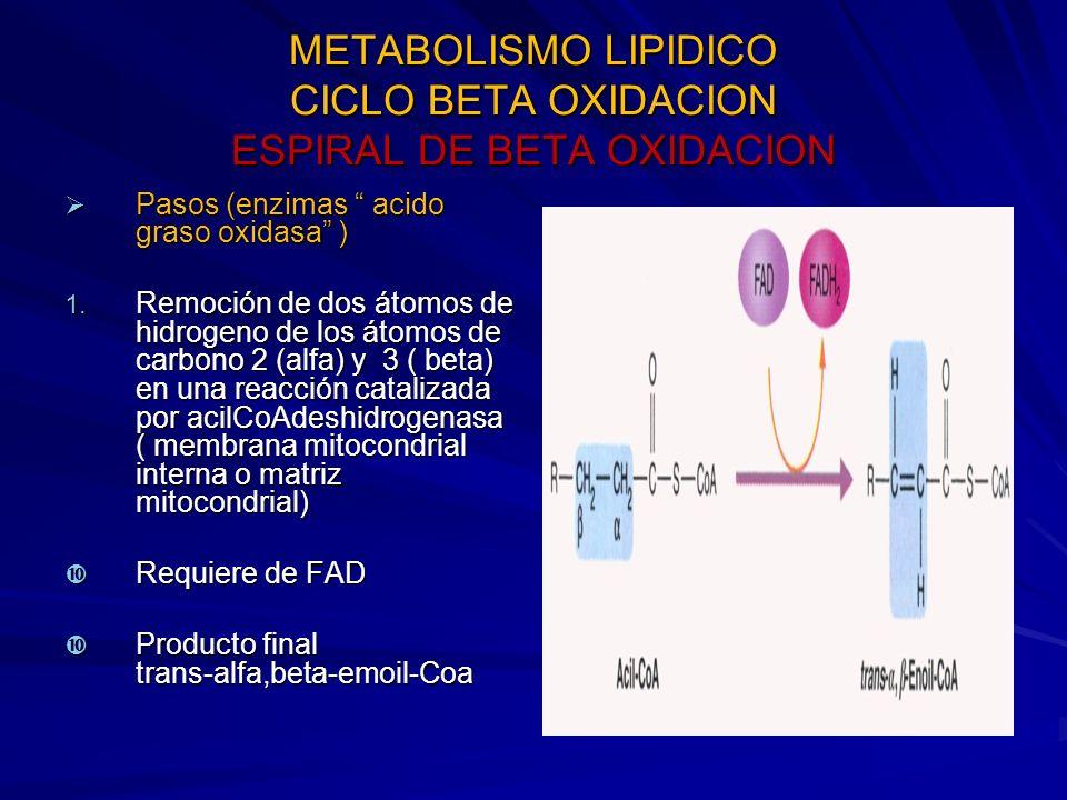 METABOLISMO LIPIDICO CICLO BETA OXIDACION ESPIRAL DE BETA OXIDACION Pasos (enzimas acido graso oxidasa ) Pasos (enzimas acido graso oxidasa ) 1. Remoc