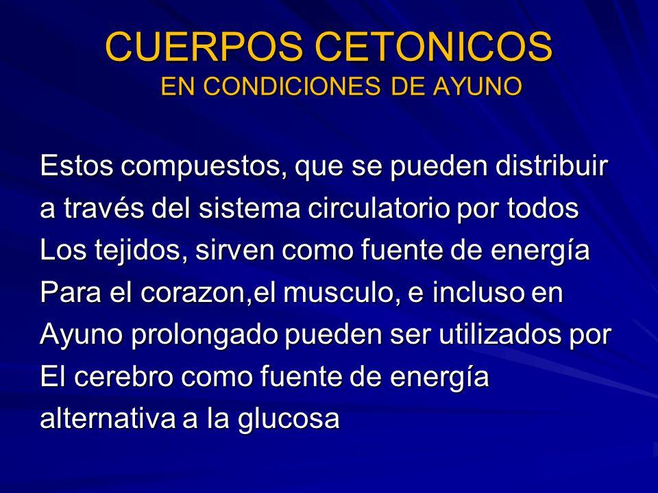 CUERPOS CETONICOS EN CONDICIONES DE AYUNO Estos compuestos, que se pueden distribuir a través del sistema circulatorio por todos Los tejidos, sirven c