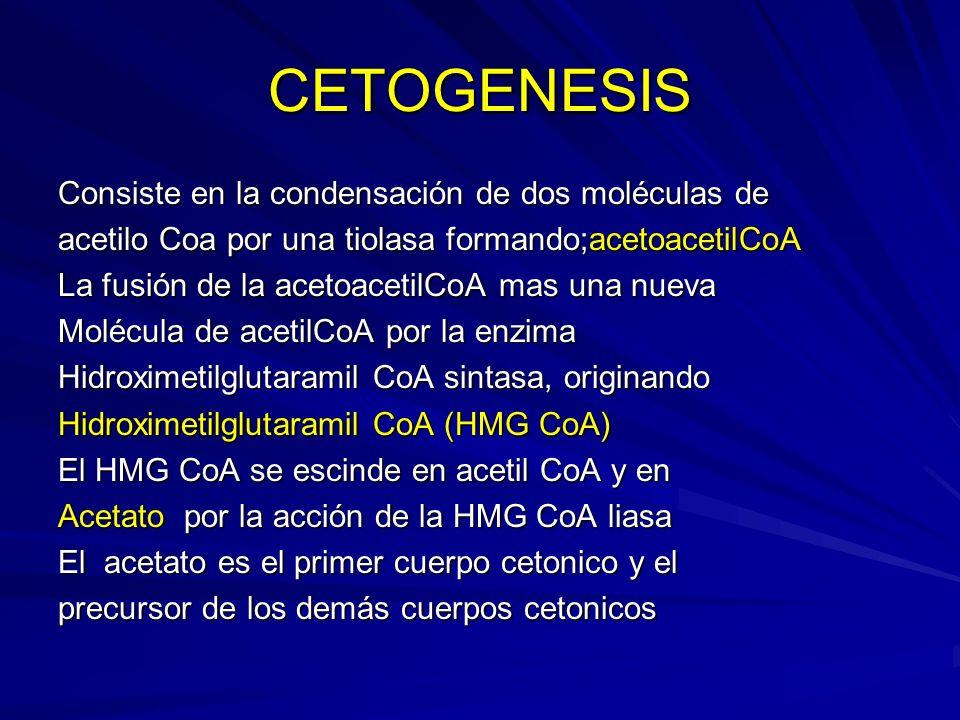 CETOGENESIS Consiste en la condensación de dos moléculas de acetilo Coa por una tiolasa formando;acetoacetilCoA La fusión de la acetoacetilCoA mas una
