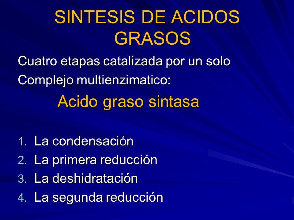 SINTESIS DE ACIDOS GRASOS Cuatro etapas catalizada por un solo Complejo multienzimatico: Acido graso sintasa Acido graso sintasa 1. La condensación 2.