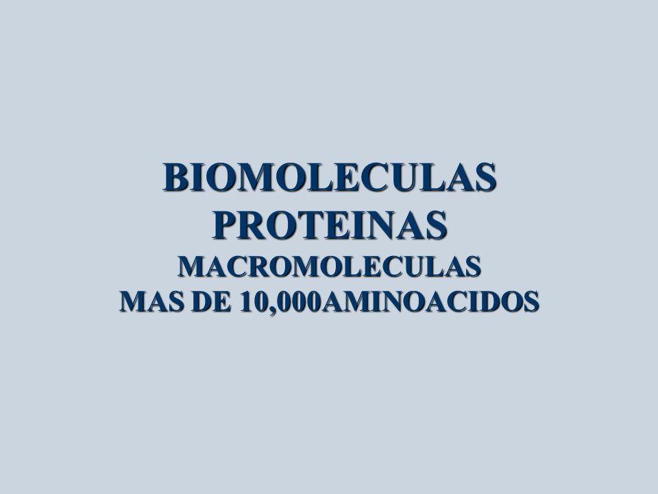 BIOMOLECULAS PROTEINAS MACROMOLECULAS MAS DE 10,000AMINOACIDOS